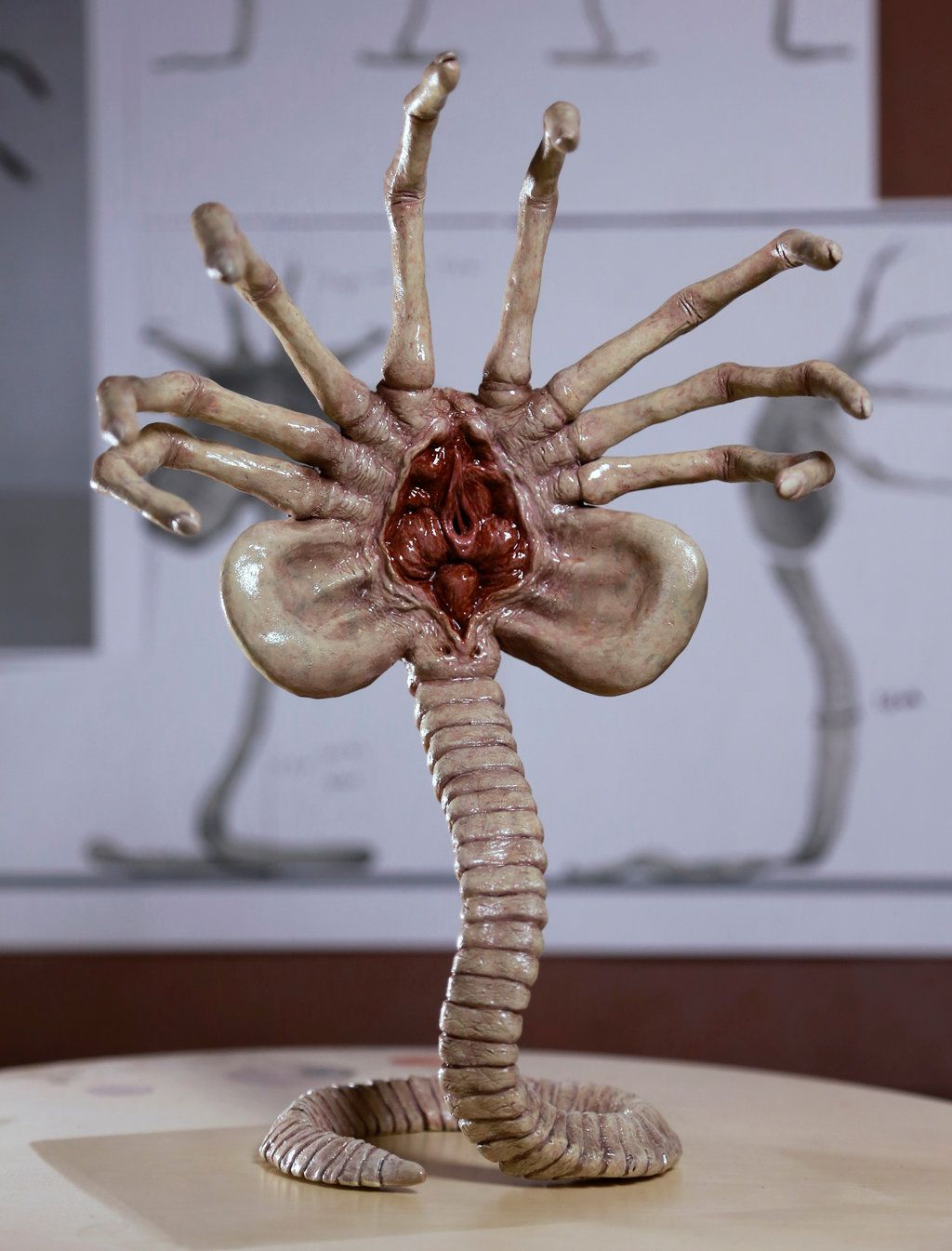 fuckyeahxenomorphs:Alien Facehugger Front View by FUVL