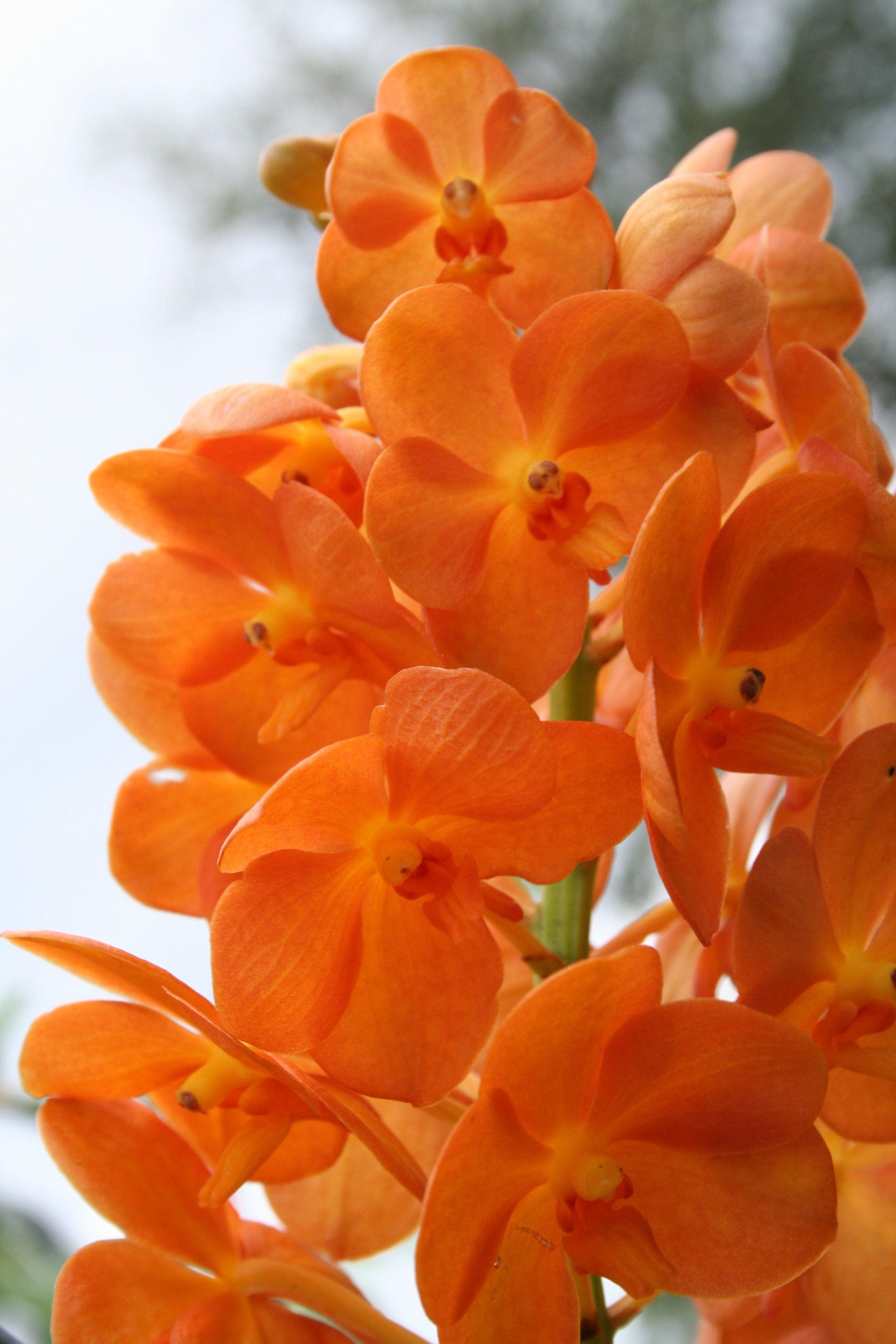 Orchids ORANGE... Pinterest Orchid, Plant sale and