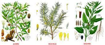 Resultado de imagen para imagenes de plantas medicinales y sus ...