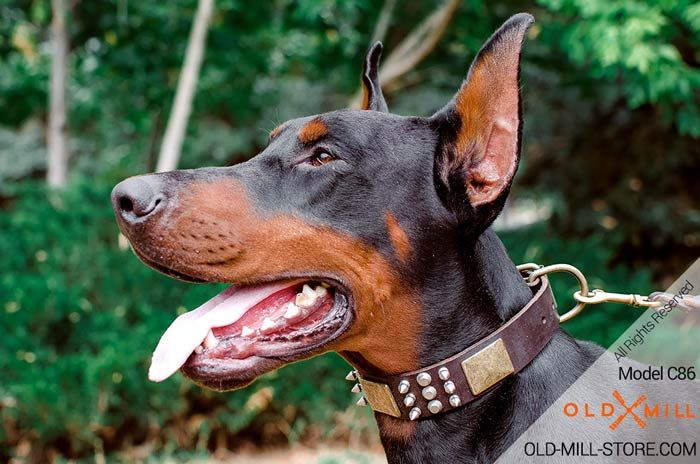 Buy Designer Leather Doberman Collar With Spikes Dog Collars