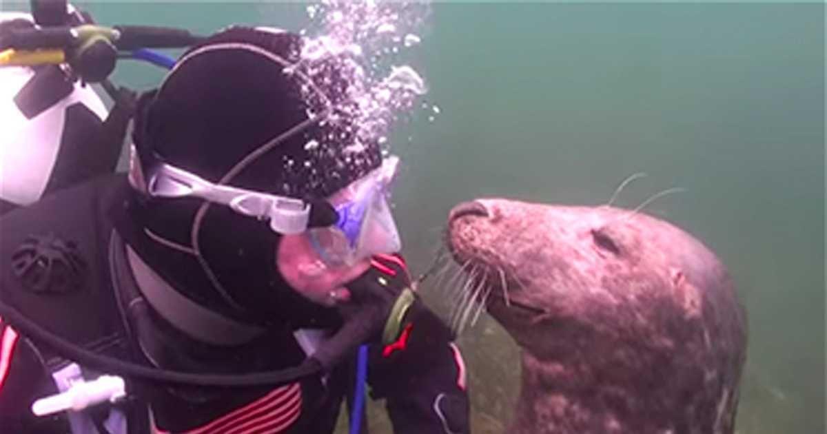 Duiker Gary Grayson bevond zich in de zee voor de Scilly-eilanden ten zuiden van Engeland, toen hij plotseling werd vergezeld door twee grijze zeehonden.