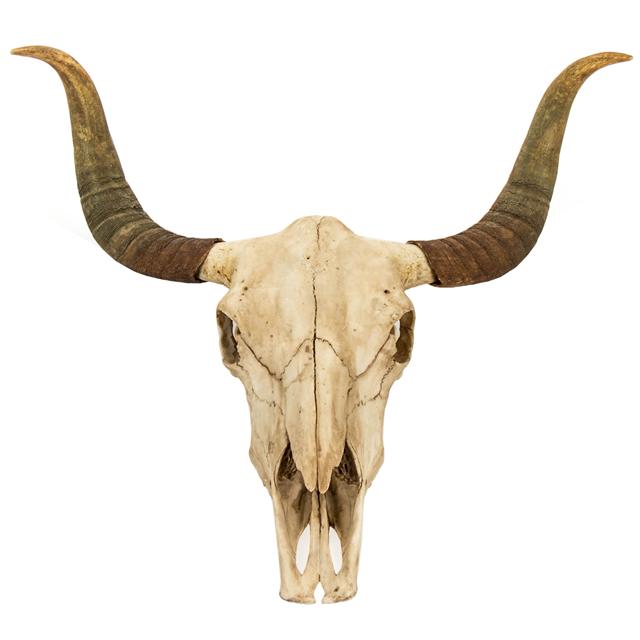 Bull Skull Wall Decor Ii Art Crane Squelette Dessin