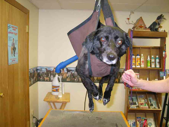 Psdg Grooming Hammock Click Options Under Breed Size For Sling