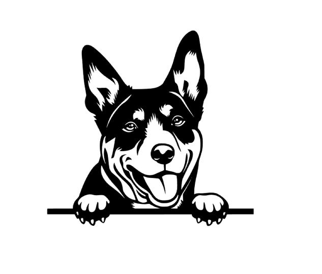 Peeking Australian Kelpie Dog Car Decal Vinyl Sticker Red Heeler Dog Dog Decals Australian Kelpie Dog