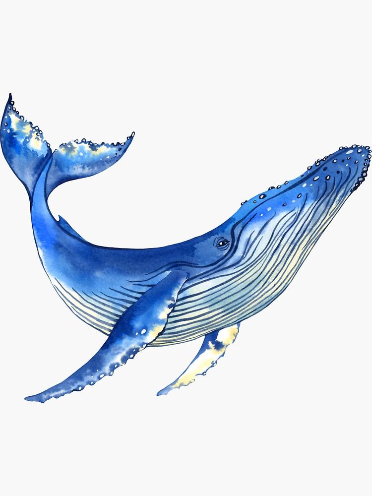 Watercolor Whale Sticker By Evgeniia Zagreeva Watercolor Whale Sea Creatures Art Whale Painting