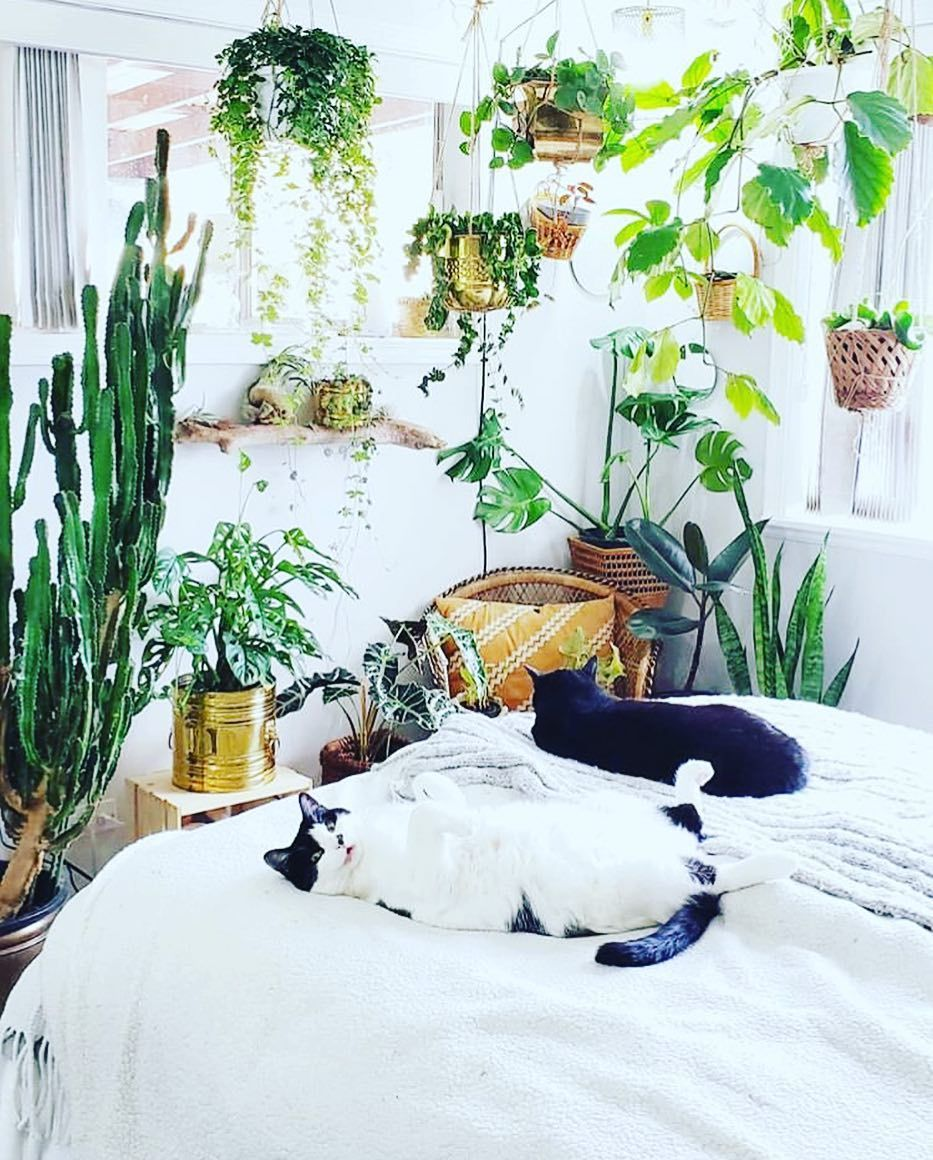 pets and plants cats and plants hanging plants trailing plants ...