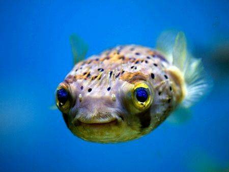 Happy little guy must know its friday tomorrow fish happy happy little guy must know its friday tomorrow fish happy fishing ocean water friday australia lure aus warehouse shimano diawa penn rapala publicscrutiny Image collections