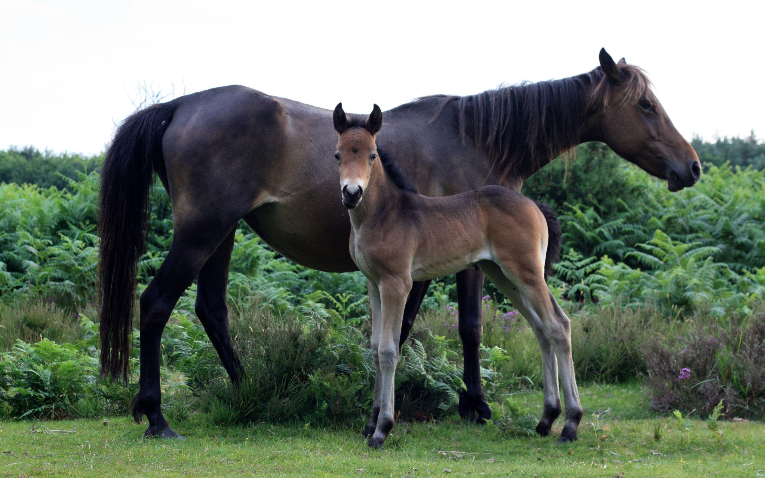 Top Wallpaper Horse Green - f3d7d0ed8133b87ce1aef156900bc4a1  HD_904310.jpg