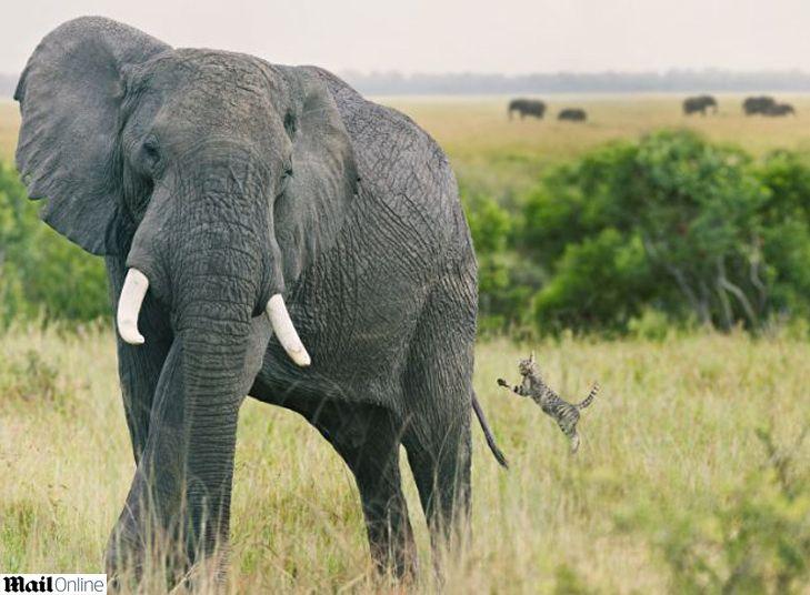 As fotos foram feitas em uma reserva africana e mostram leões, zebras, elefantes, entre outros.