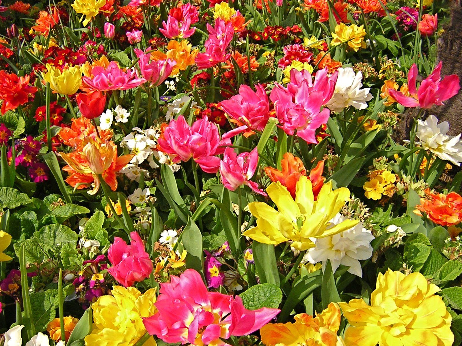 E assim são os canteiros de flores na primavera. London UK