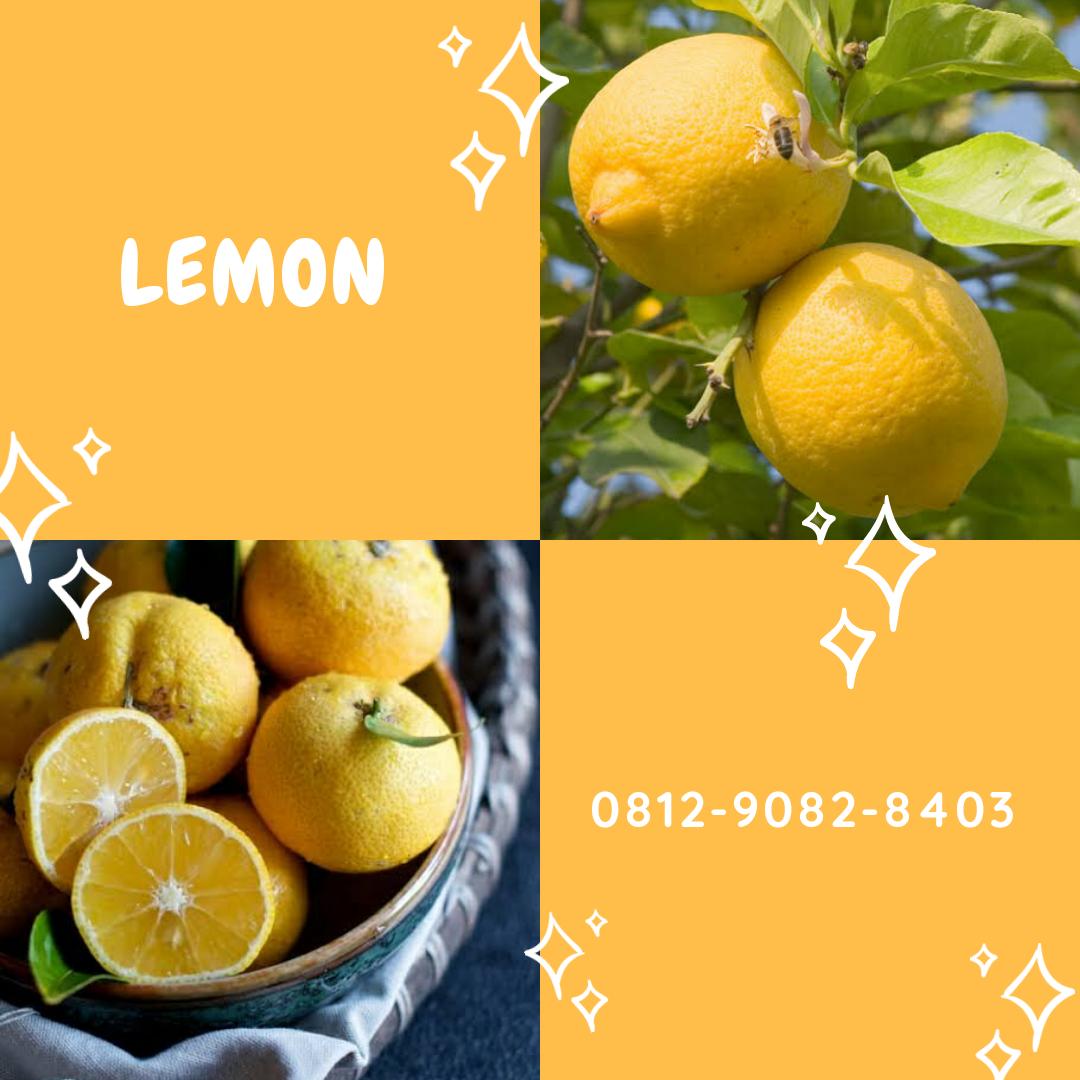 Buah Lemon Kampung Buah Lemon Tea Buah Lemon Balm Buah Jeruk Lemon Jeruk Nipis