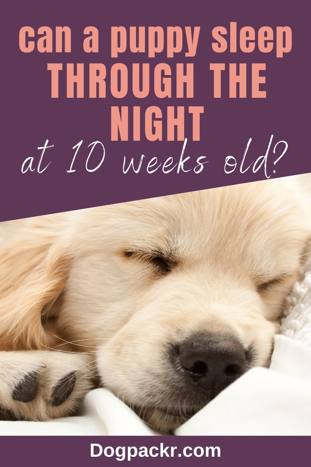 Can a 10WeekOld Puppy Sleep Through the Night