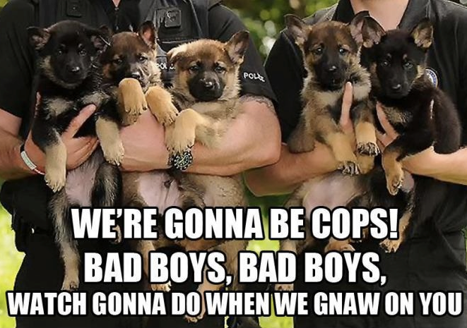 Looking For A Career Change Funny Animals Cop Dog Funny Dogs
