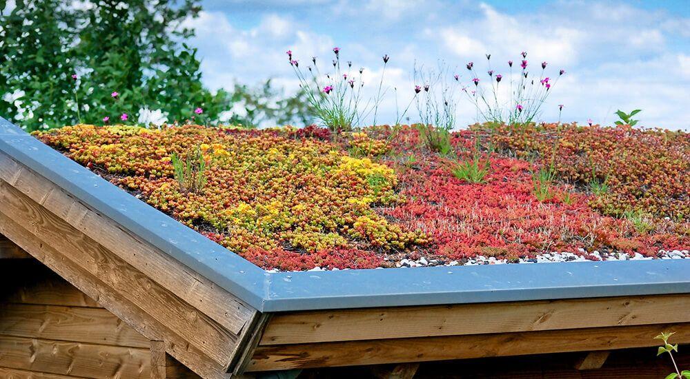 Construire Une Toiture Vegetalisee Cout Et Devis Toiture Verte