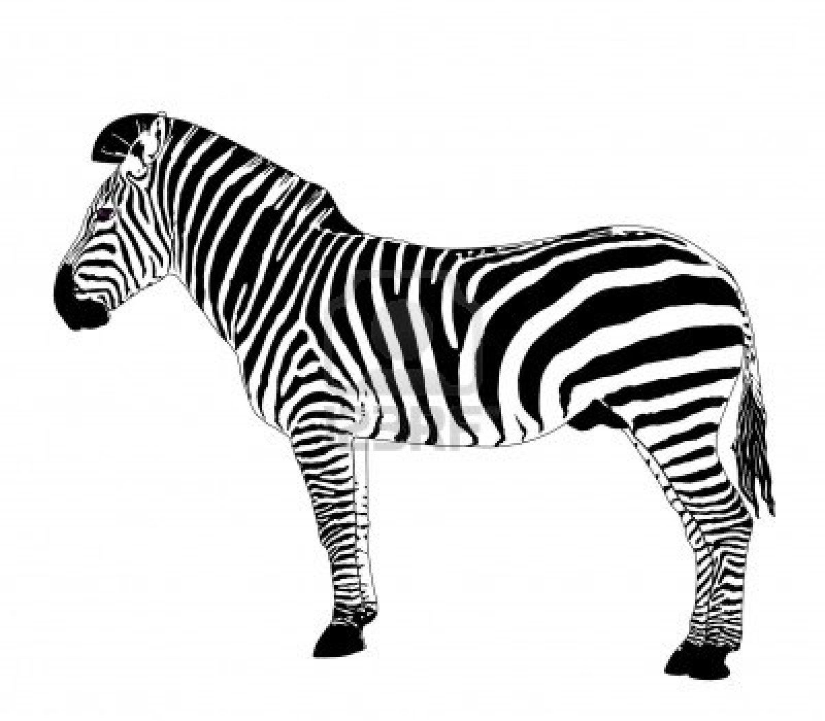 clipart african animals | Zebra Vector Illustration Royalty Free ...