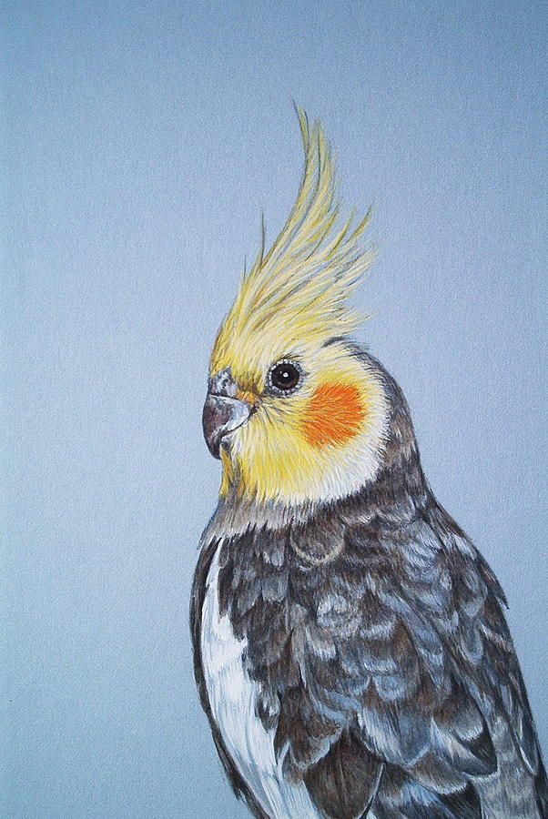 Portrait Close Up Cockatiel Head By Andrea Ellwood In 2019