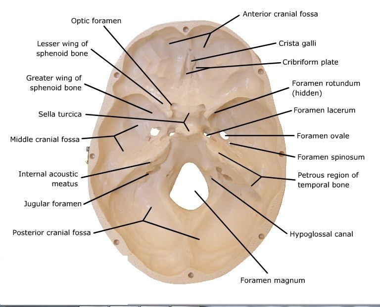 Skeletal System Diagrams Ostepathy Pinterest