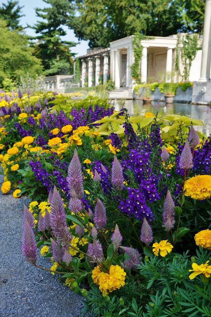 Осенние цветы в саду: 65 Фото с названиями | Садовый домик ...