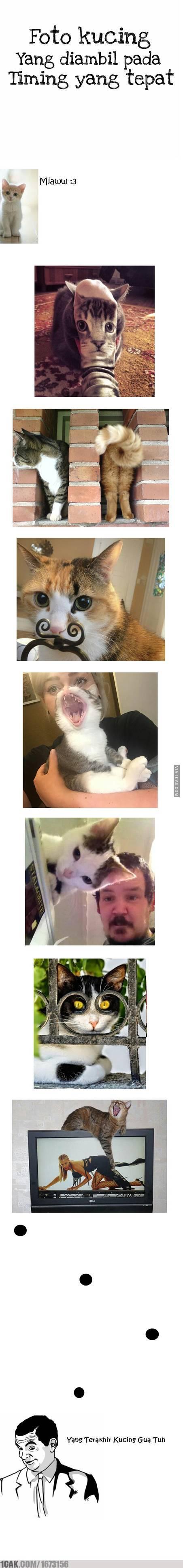 Foto Kucing Yg Diambil Pada Waktu Yang Tepat Other Pinterest