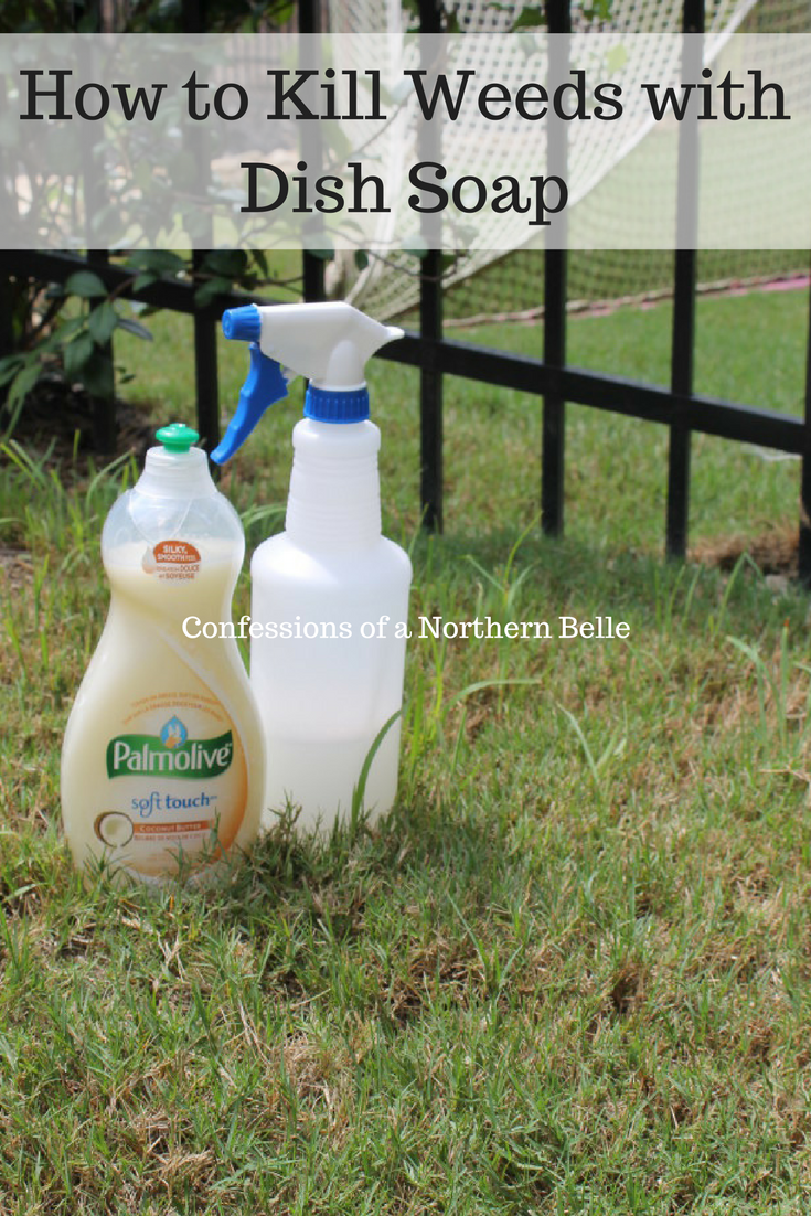 How to kill weeds with dish soap pinterest killing weeds weed