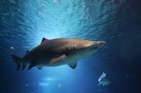 Afbeeldingsresultaat voor waterdieren in de zee
