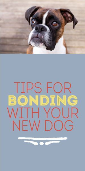 Tips for Bonding with Your New Dog Dogs, Boxer dogs, Dog
