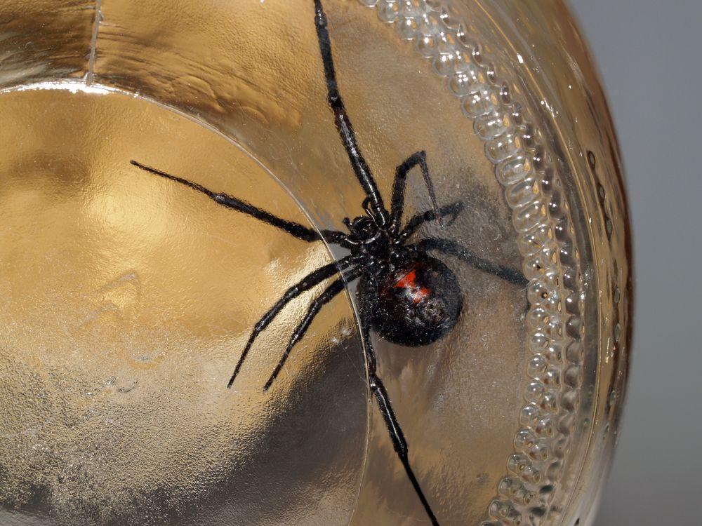 Uh oh araign es pinterest araign e - Araignee des jardins en 6 lettres ...