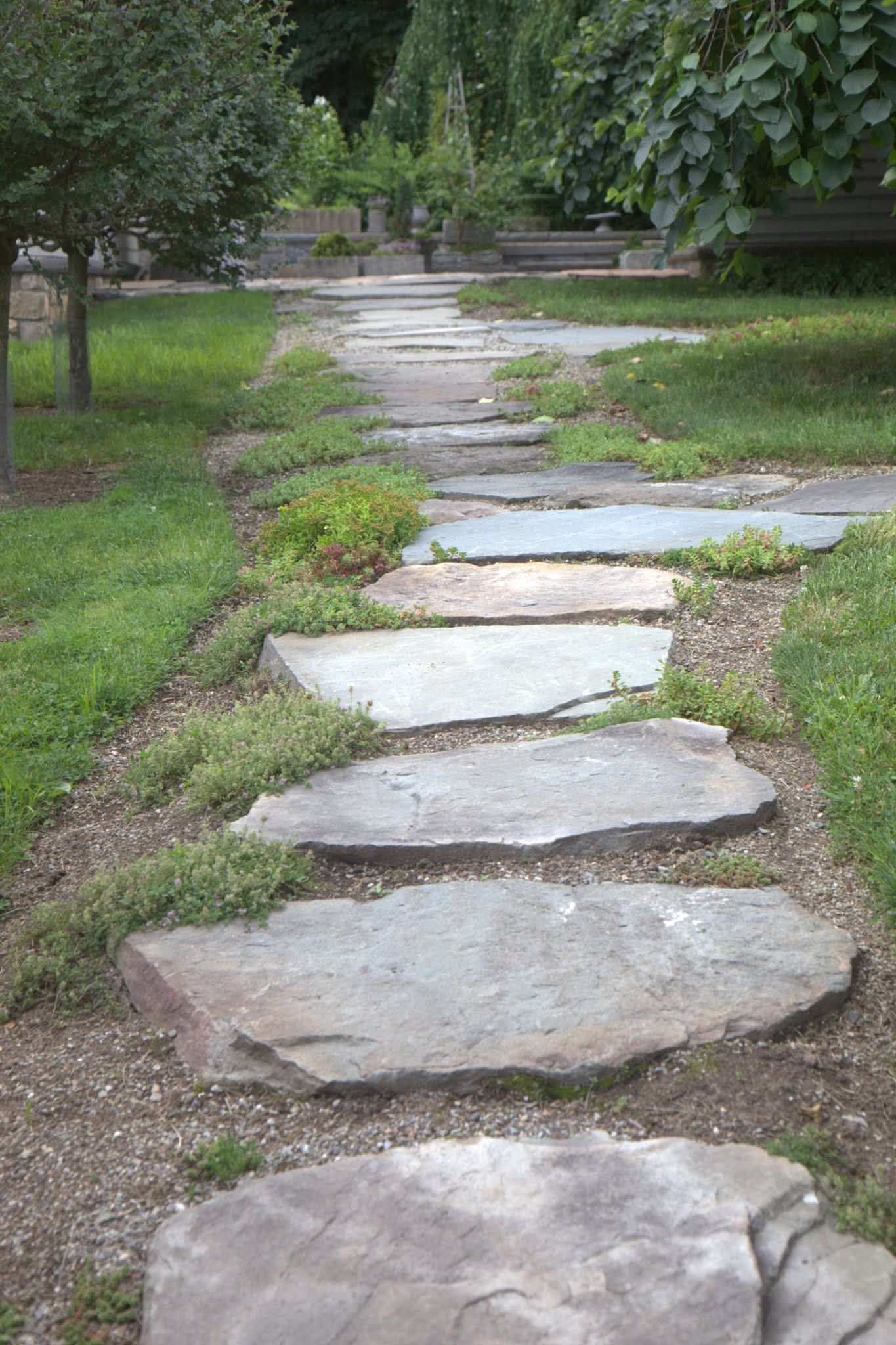 This Sedum Is Planted In The Gravel Between A Stepping Stone Path And Is Growing And Spreading Very Nicely Garden Stones Garden Walkway Garden Design
