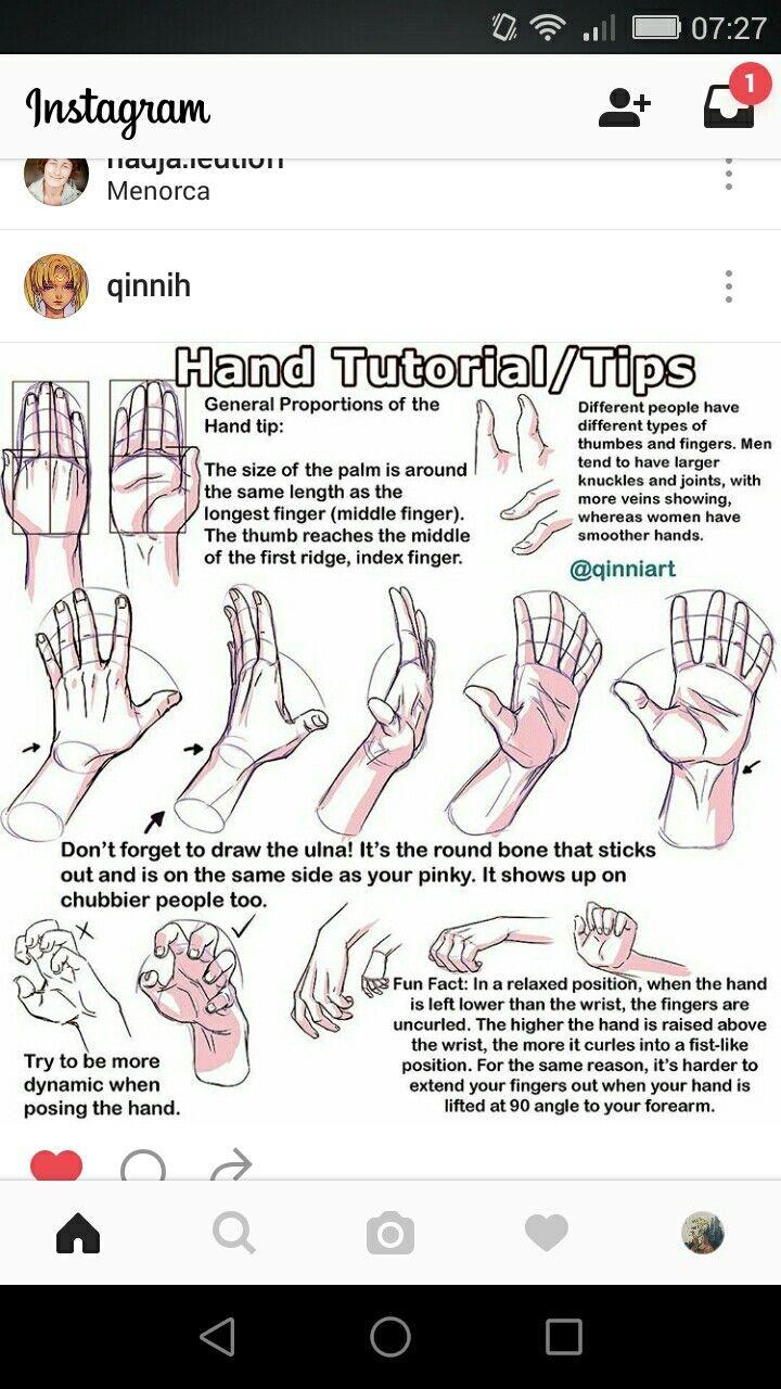 Nice Pinky Finger Anatomy Mold Anatomy Ideas Yunokifo