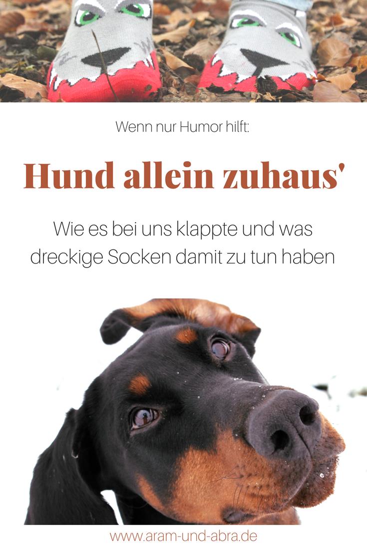 Alleinbleiben Beim Hund Unsere Top 5 Hundeunsinn Hunde Hunde