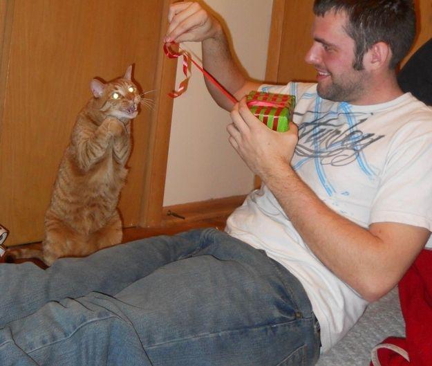 """""""Vas-y, ouvre la boîte ! Et découvre le 'cadeau' que je t'ai laissé.""""   22 chats qui veulent votre mort"""