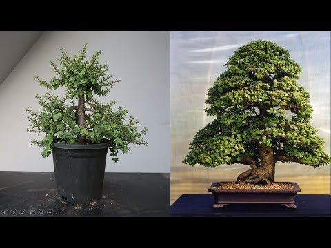 Jade Plant Pruning To Reduce Size And Encourage Branching Youtube Jade Plant Pruning Jade Plants Plants