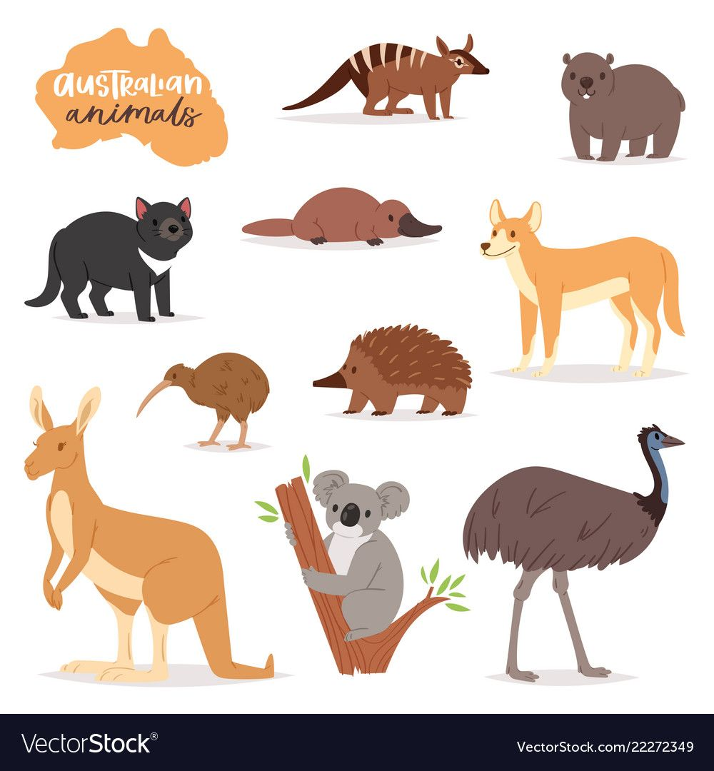 Australian Animals Animalistic Character In Vector Image On Vectorstock Australian Animals Australia Animals Kangaroo Drawing