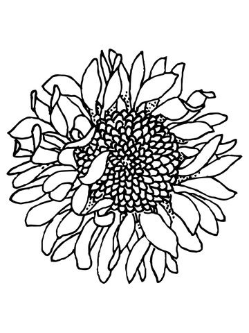 Click To See Printable Version Of Head Of Sunflower Coloring Page