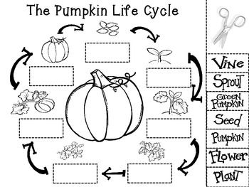 CUT AND PASTE THE STEPS OF THE PUMPKIN LIFE CYCLE. THIS A
