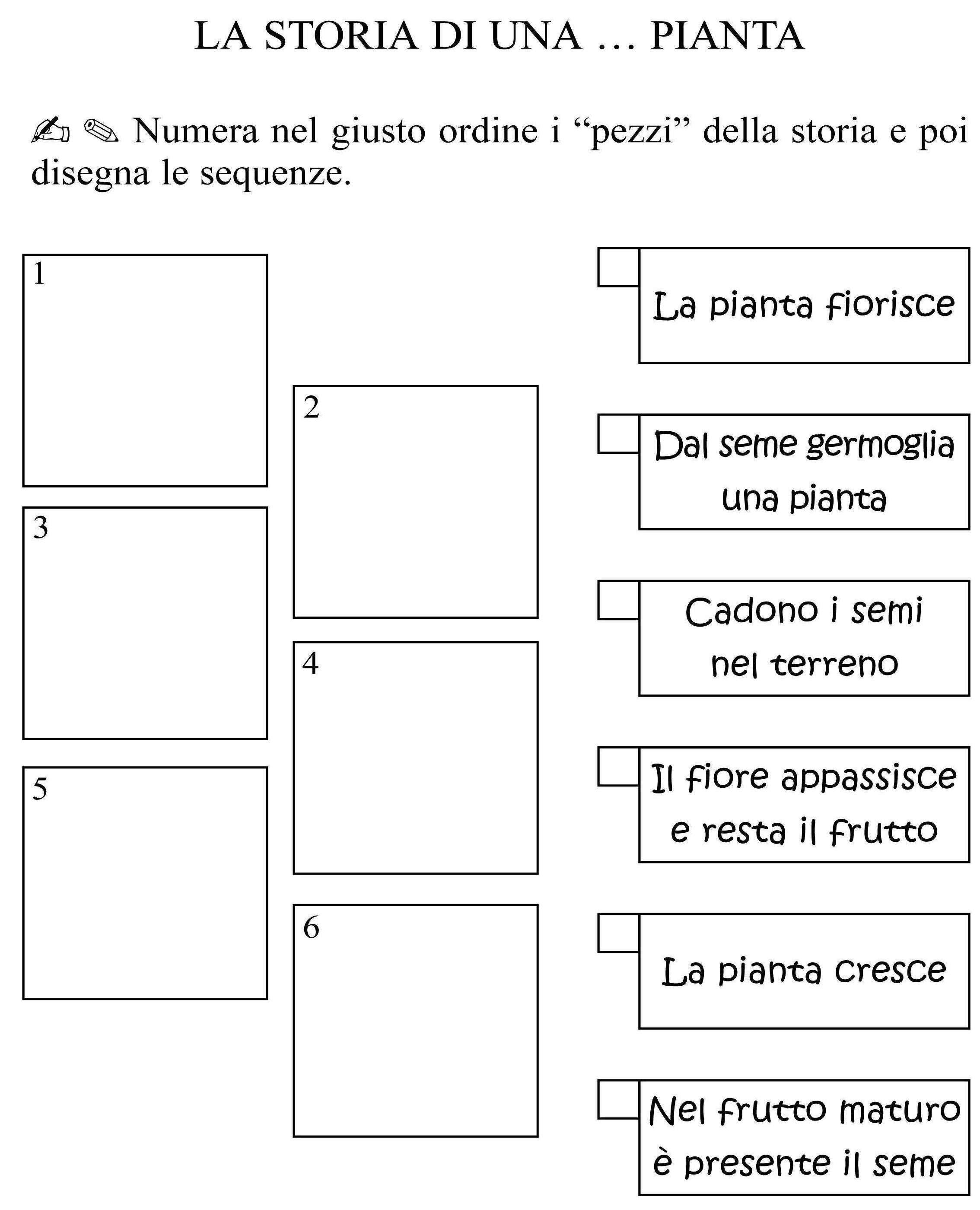 Estremamente ciclo della pianta classe seconda.jpg | Materiale e schede scienze  PW34