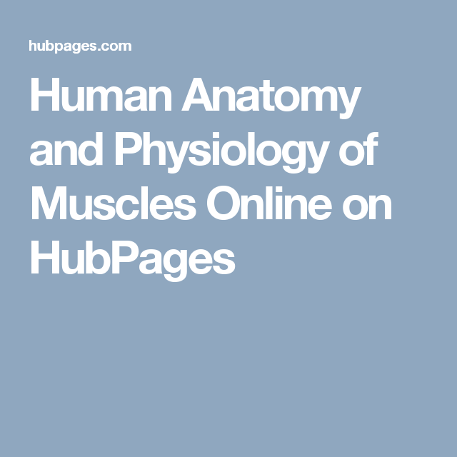 Human Anatomy And Physiology Of Muscles Online On Human Anatomy