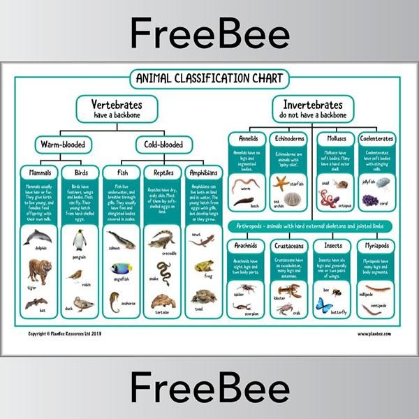 15+ Clipart Of Animal Classification Table