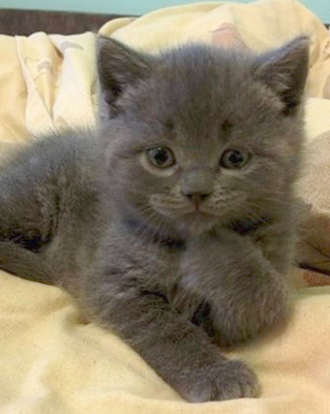 Found Cats And Kittens Activity Book Follow Kittens Cutest Cute Cats Cute Baby Animals