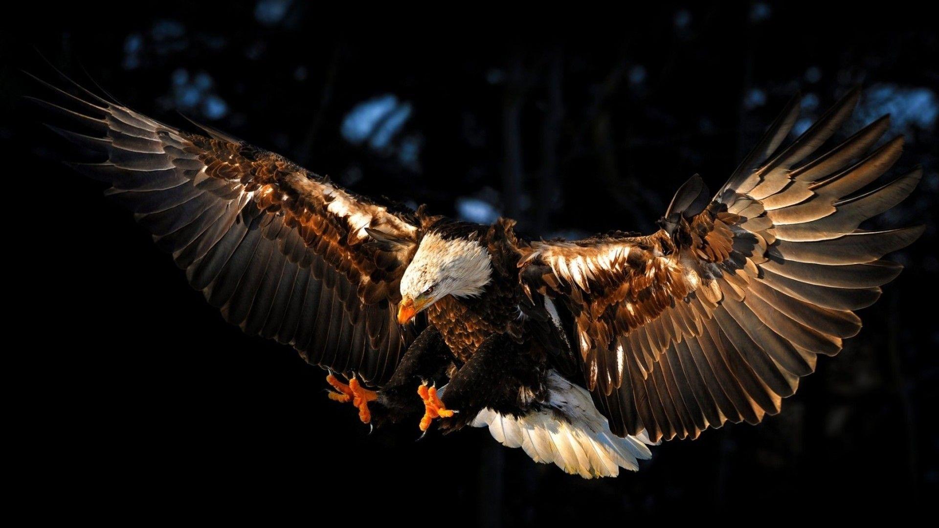 Philadelphia Eagles Wallpapers Wallpaper Eagle Wallpaper Types Of Eagles Bald Eagle