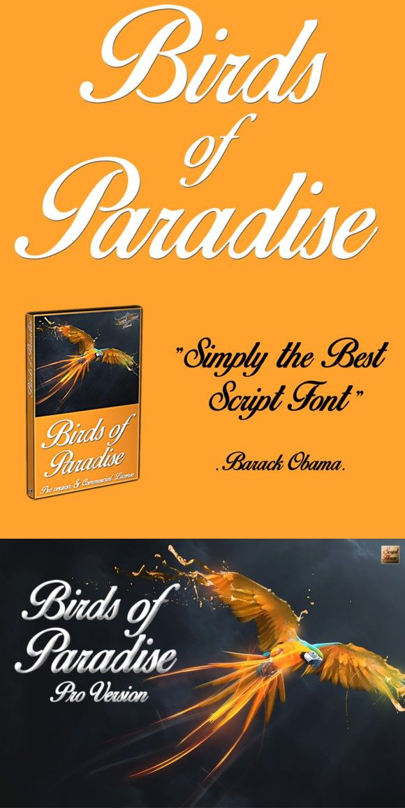 Bird Of Paradise Font : paradise, Script, Fonts