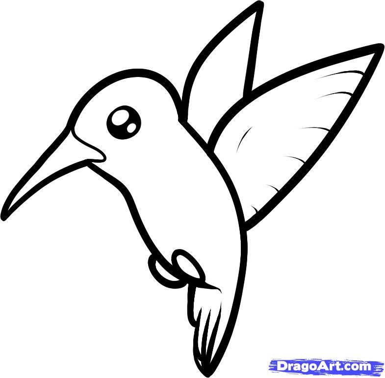 Line Drawing For Kids : Simple hummingbird line drawing how to draw a