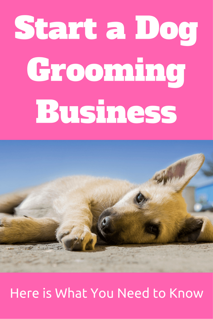 Start A Dog Grooming Business Pinterest And Salon