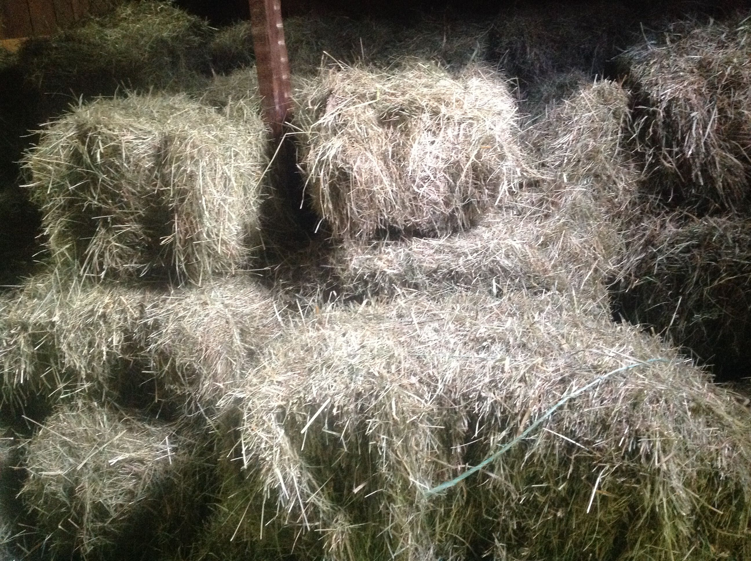 hay in a wooden manger - Google Search