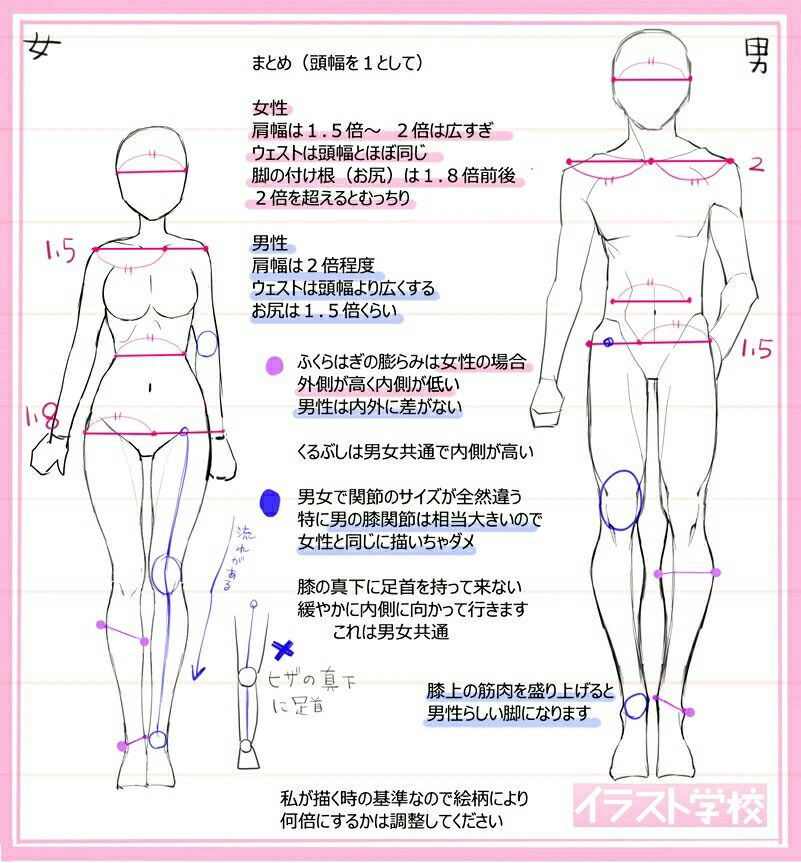 Pin By Zheon On Anime Body Anatomy And Proportions Drawings
