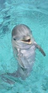 Pin By Hunter Mossey On Cute Animals Baby Dolphins Dolphins Cute Animals