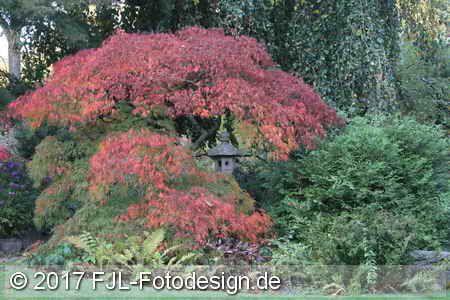 Japanischer Garten Koln Leverkusen Im Herbst 2017 Japanischer Garten Garten Japan