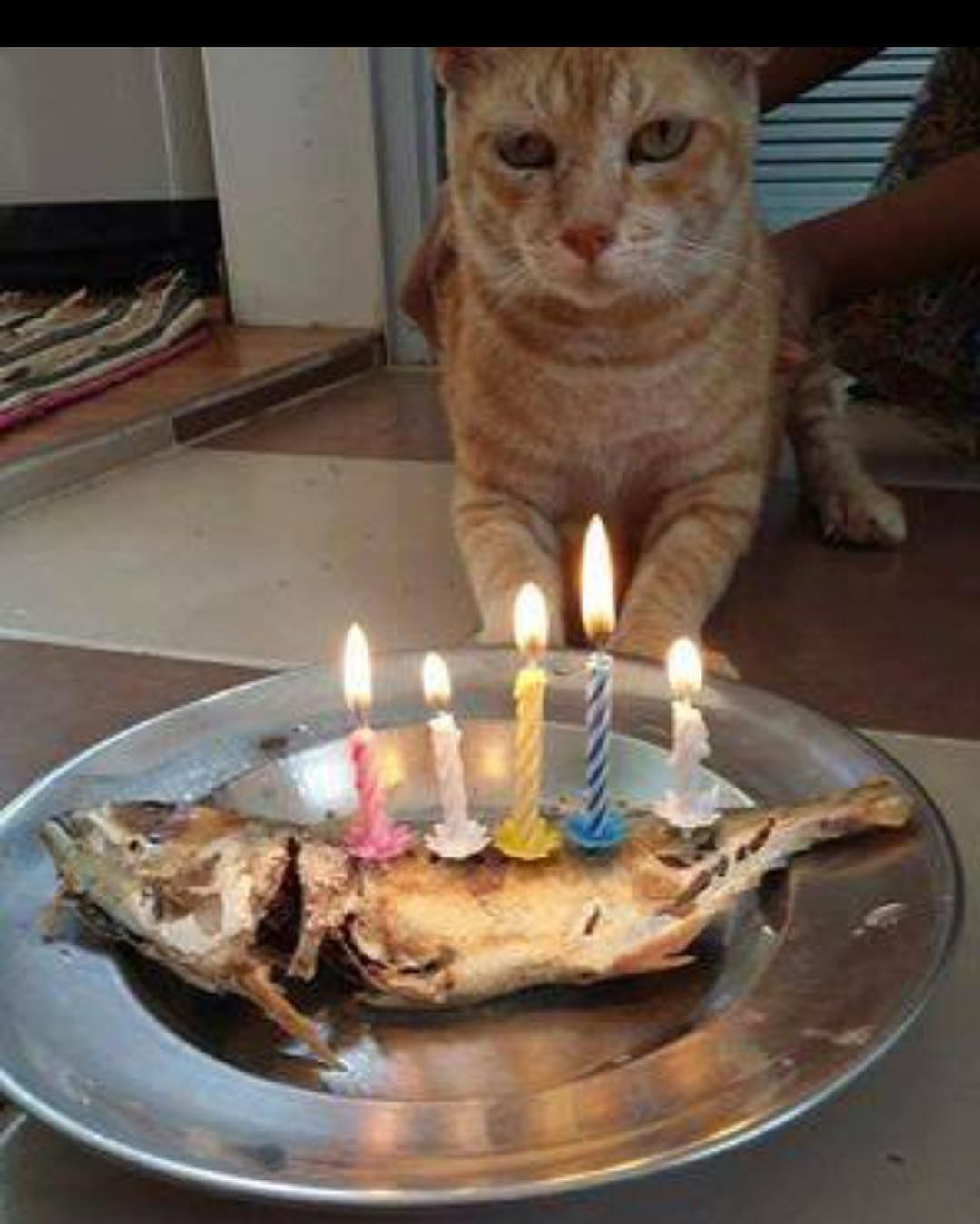 Tag Someone Who Only Eat Fish Lol Goodpeople86 Funny African Pics Cat Birthday Animal Tv Love Your Pet