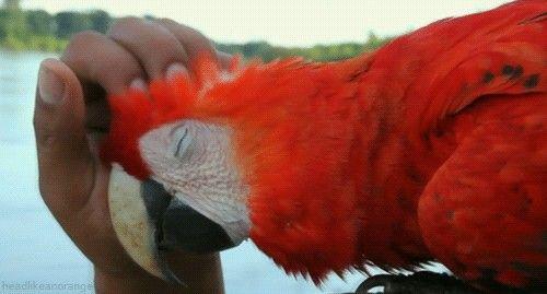 Amazônia!