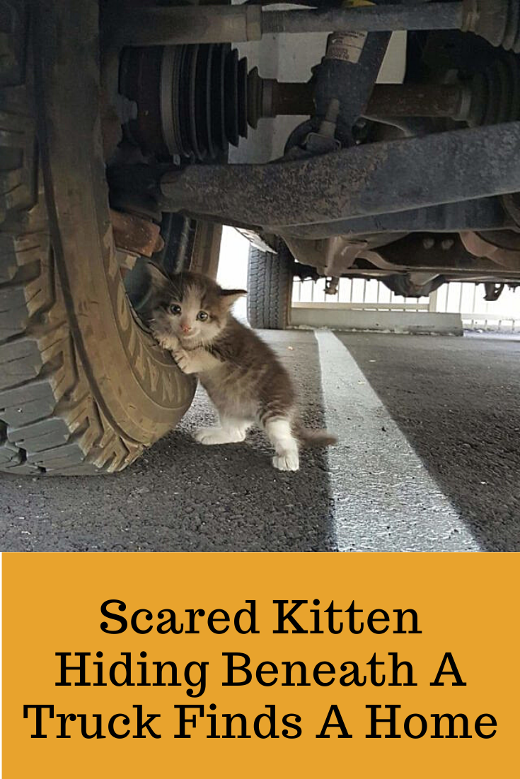 Scared Kitten Hiding Beneath A Truck Finds A Home In 2020 Kitten Baby Cats Scared